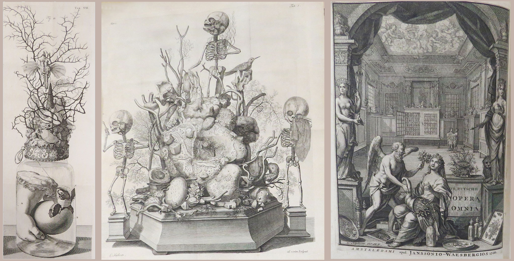 Treasures from the Rare Book Room: Anatomy as Art | HSLS Update