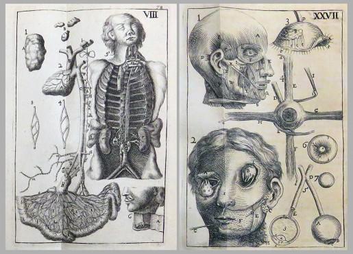 Corporis humani anatomiae, 1710
