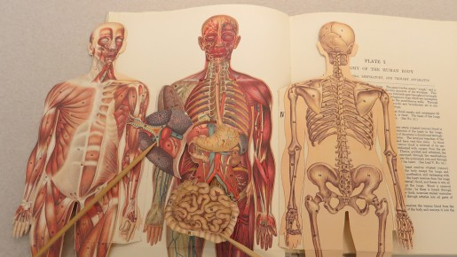 Falk Library Exhibit: Interactive Anatomy—Flips, Flaps, and Pop-up ...