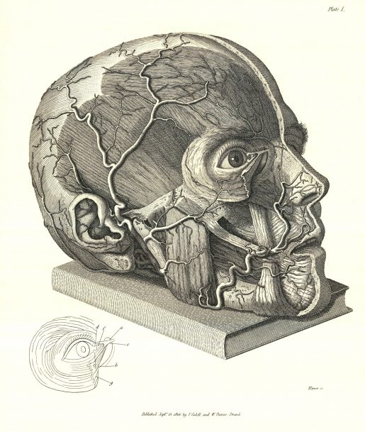 Scarpa's illustration of facial nerves, 1806