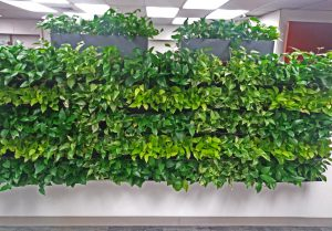 Living wall arrangement of plants