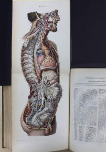 Anatomy drawing extending out of a book